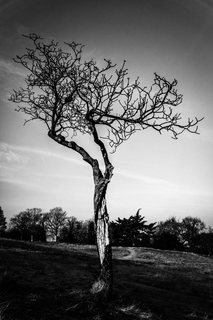 Royal Parks | - Greenwich, fog - fabianodu | ello