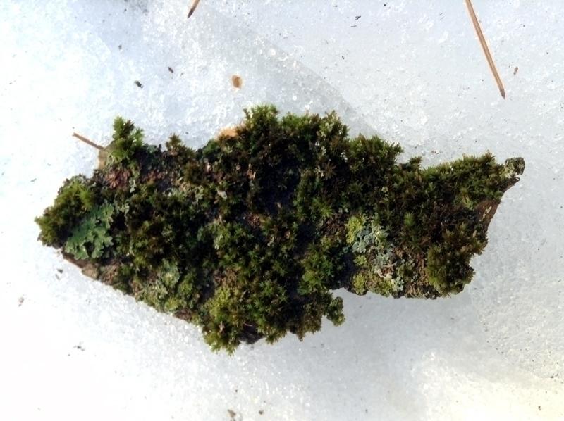 Moss - photography, nature, lichen - dispel | ello