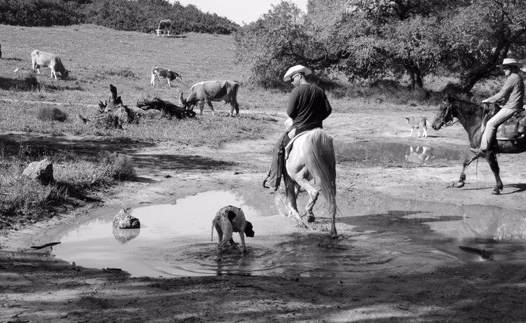 landscpae, animals, dogs, horses - ydoron1 | ello