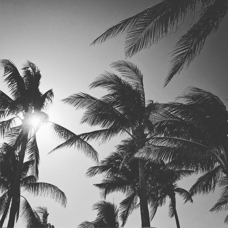 Miami, SouthBeach - socialgallerychannel   ello