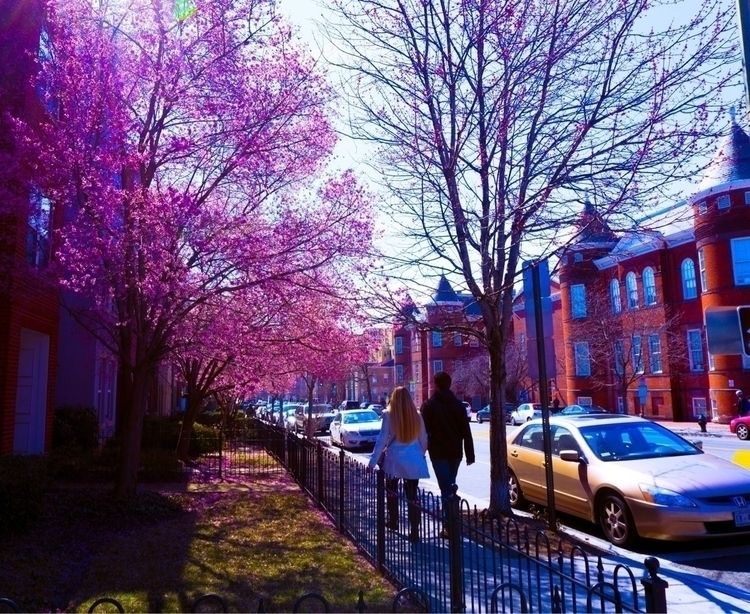 city exploding cherry blossoms - interlocuter_rex | ello