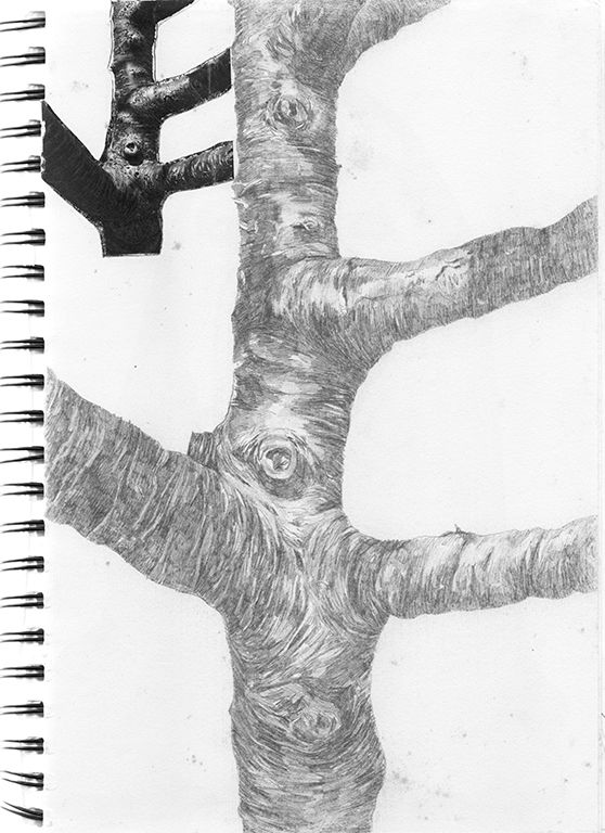 art, drawing, tree, 2014 - linsshit | ello