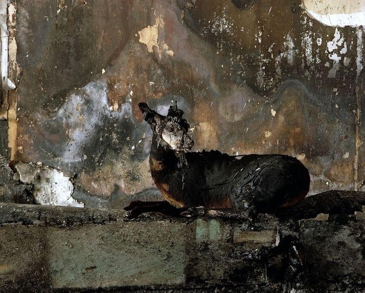 IMMORTAL Serie phtographs Marc  - blackbaronne | ello
