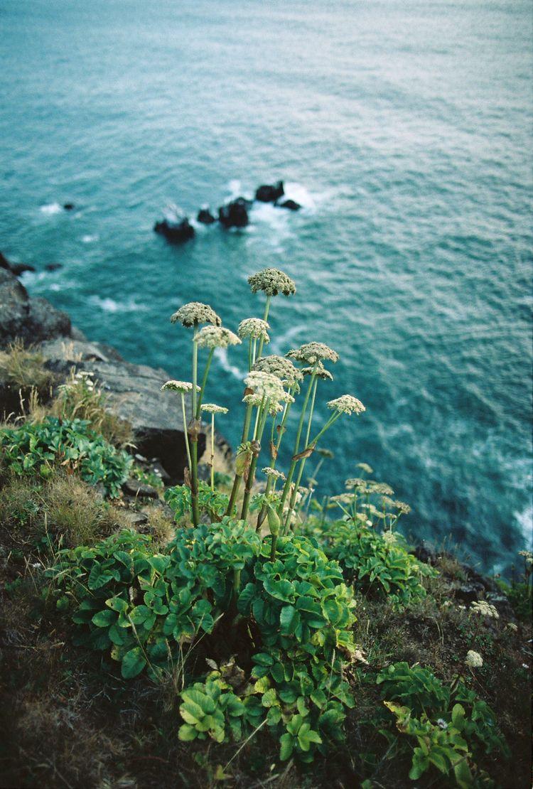 Oregon - 35mm - natalieallenco | ello