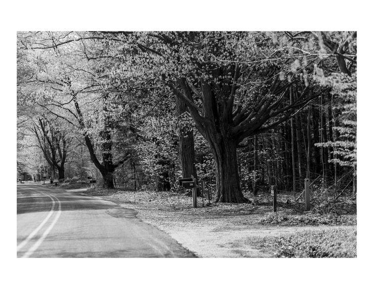 Oak Trees, Chicago 2013 - BlackandWhite - nickdelrosario | ello