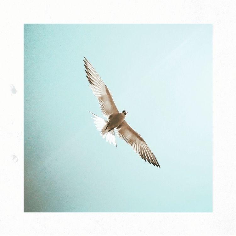 Catch breeze - seagull, fly, freedom - yogiwod | ello