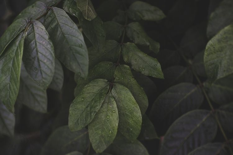 photography, nature, unique, moody - myinfjvibes | ello