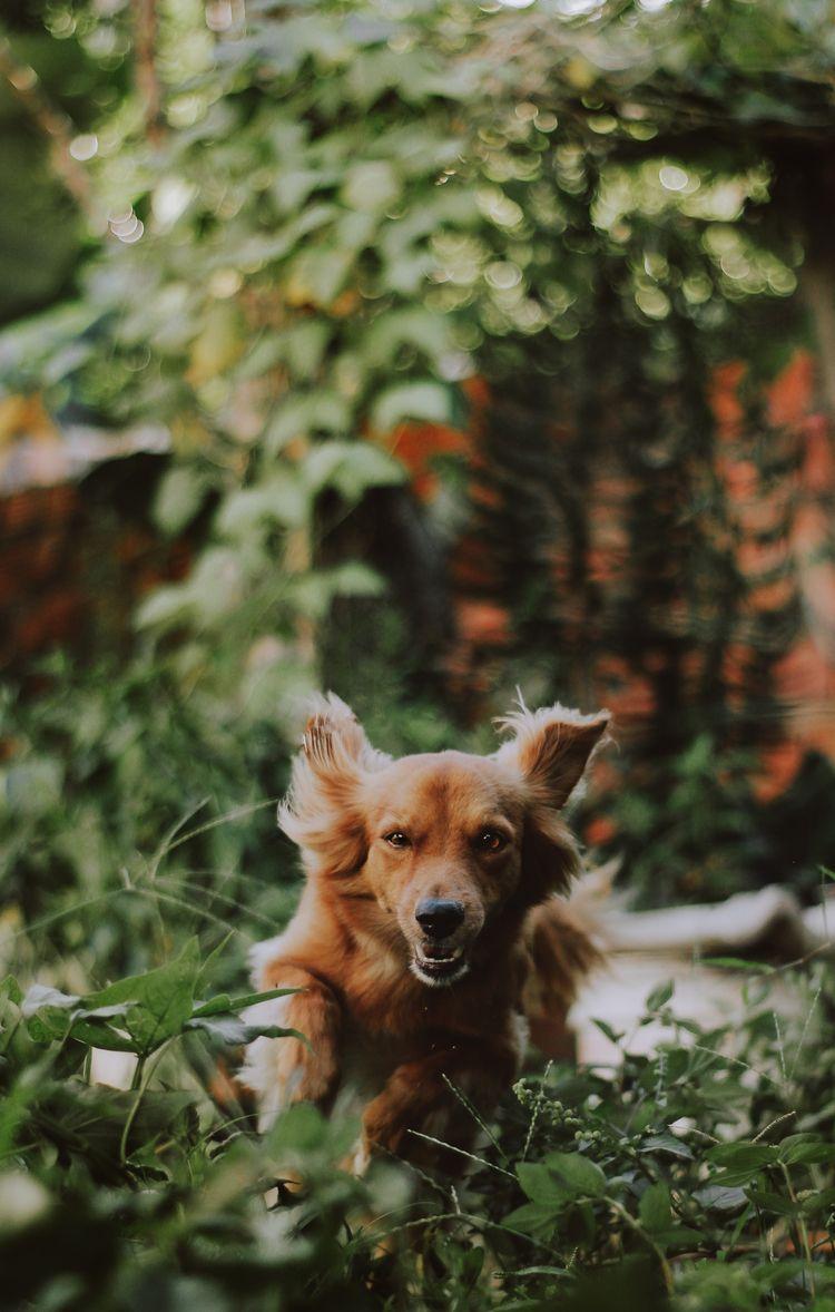 cute happy dog <3 - photography, - caiqueportraits | ello