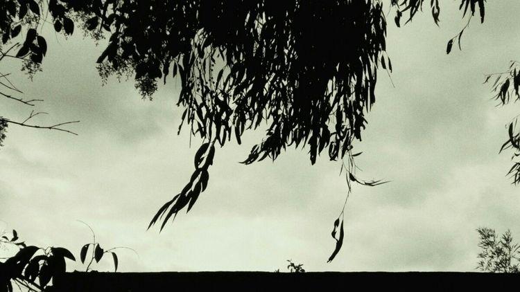 answer Thornbury, Melbourne 201 - vrenolds   ello