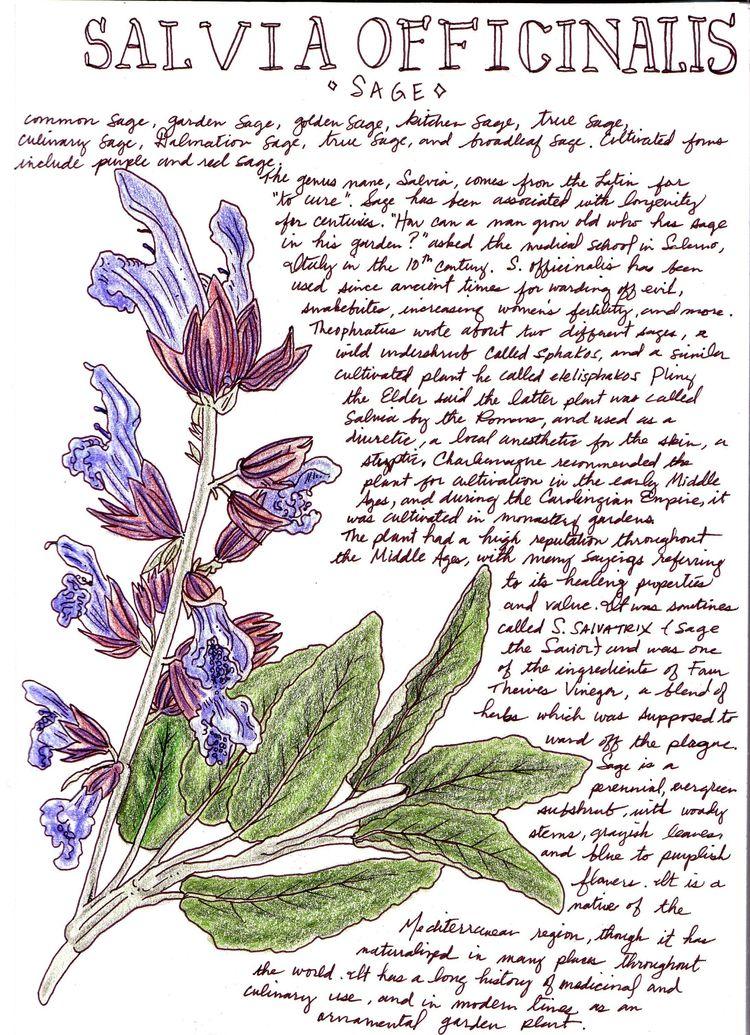 Part Herb series - art, illustration - otterglitter | ello