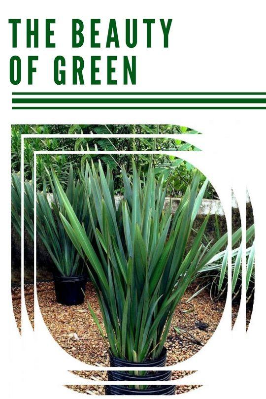 Beauty Green plants - home, urbanjungle - geex | ello