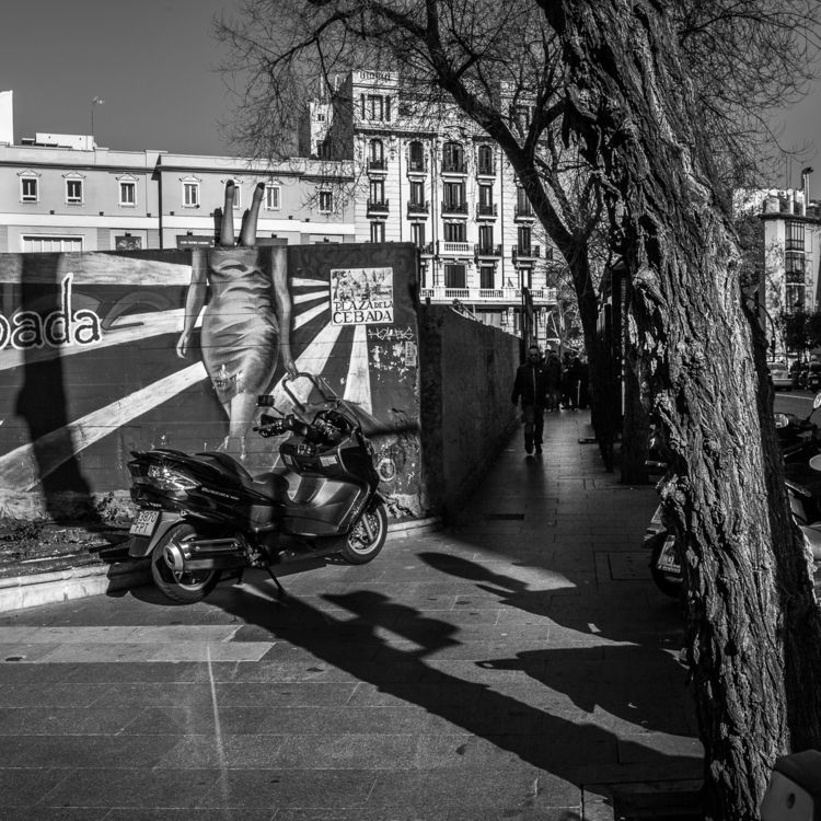 Plaza de la Cebada, 2013.12.29  - crothfoto | ello