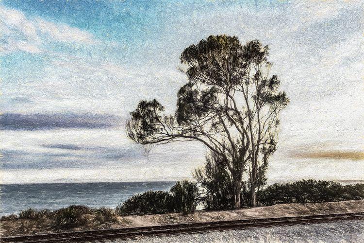 Eucalyptus Cliff childhood, Euc - davidseibold | ello