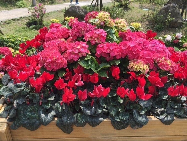 Flower season Love spring. Weat - ningjc | ello
