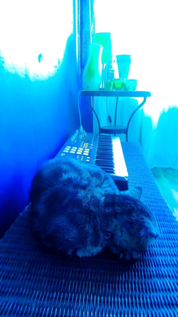 Photography Peeano - cat, catworld - peeano | ello