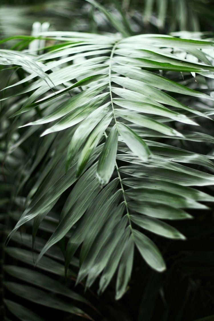 Big - photography, nature, green - albxc | ello