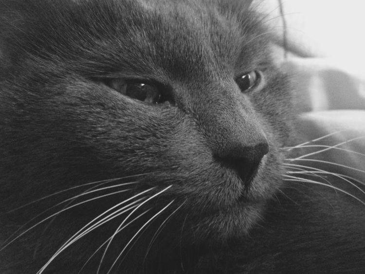 Кошачелло мой:cat::cat2:  - котейка - ankashapik | ello