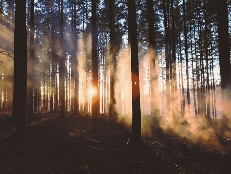 firecamp easy winter - sunset, forest - benjsschmtt | ello