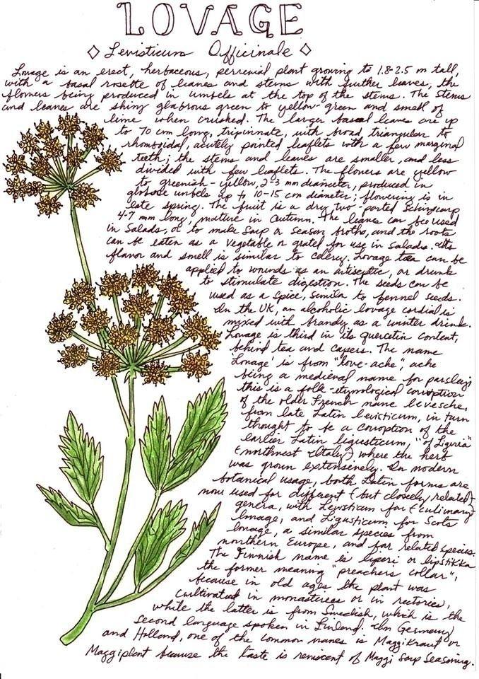 Part Herb series - art, drawing - otterglitter | ello