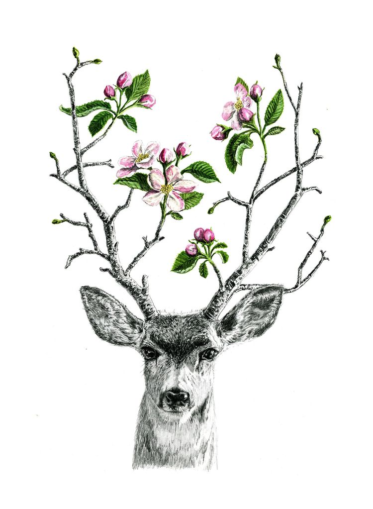 Apple Blossom Deer, graphite go - bschelling | ello