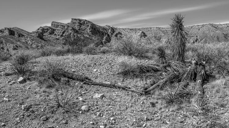 death life, Rainbow Basin Natur - frankfosterphotography | ello