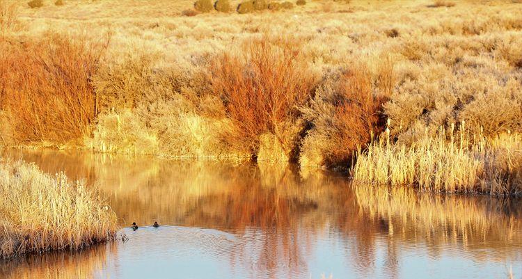 Ducks pond - tessjohnstone | ello