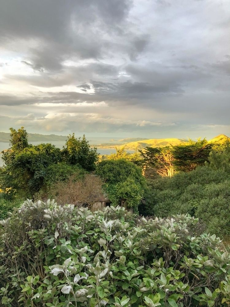 Dunedin, NZ morning - sheilan   ello