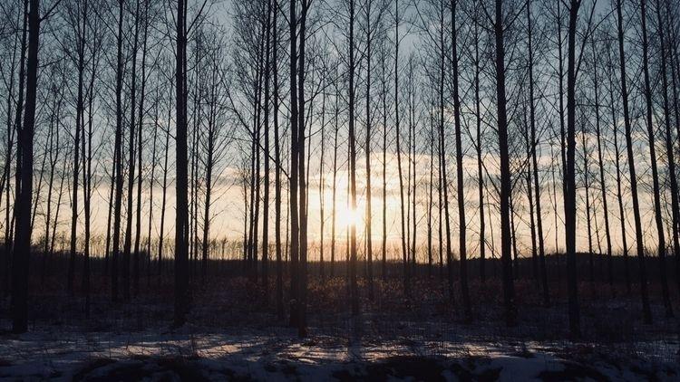 forest, almostspring, winter - editke01 | ello