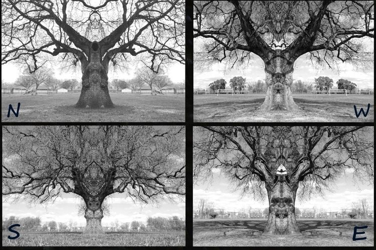 Red Oak tree tree..facing direc - zygzwurx   ello