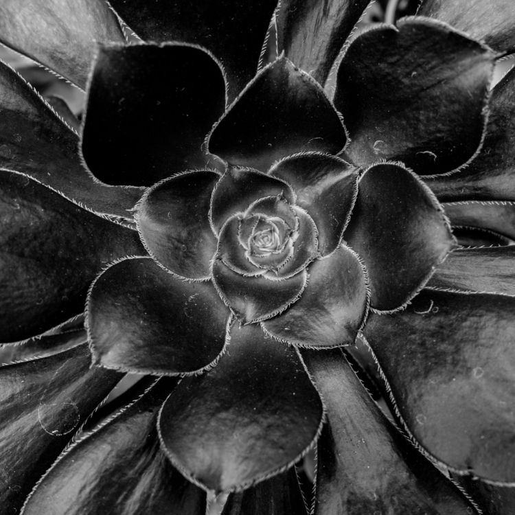 Succulent Series 2 - 6, abstract - chrishuddleston | ello