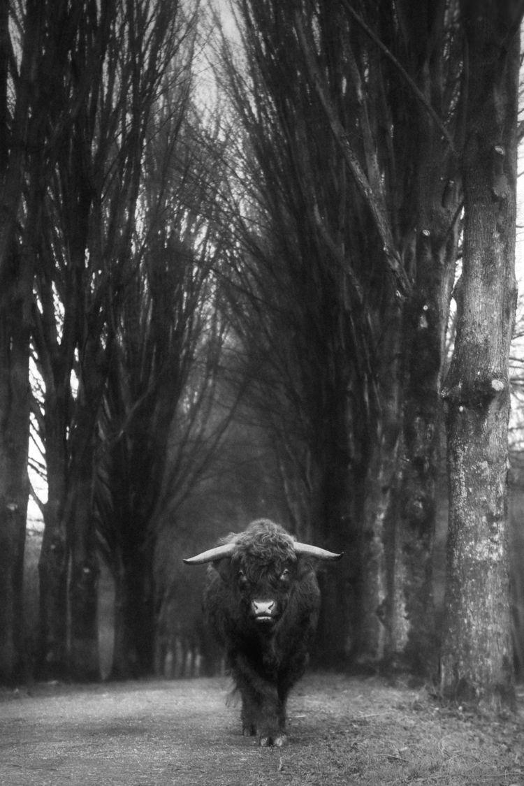 ± 2600 pound scary sweetheart - animals - klaasphoto | ello