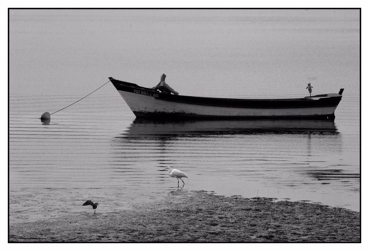 Barco - boat, barco, antonina, seascape - jsuassuna | ello