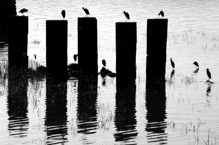 ellophotography, blackandwhitephotography - jsuassuna | ello