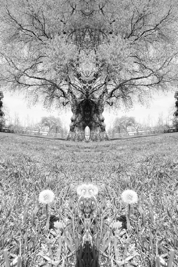 red oak tree facing dandelions - zygzwurx   ello