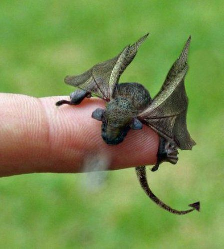 pet baby dragon - WelshDragon, Bangor - betty_adams | ello