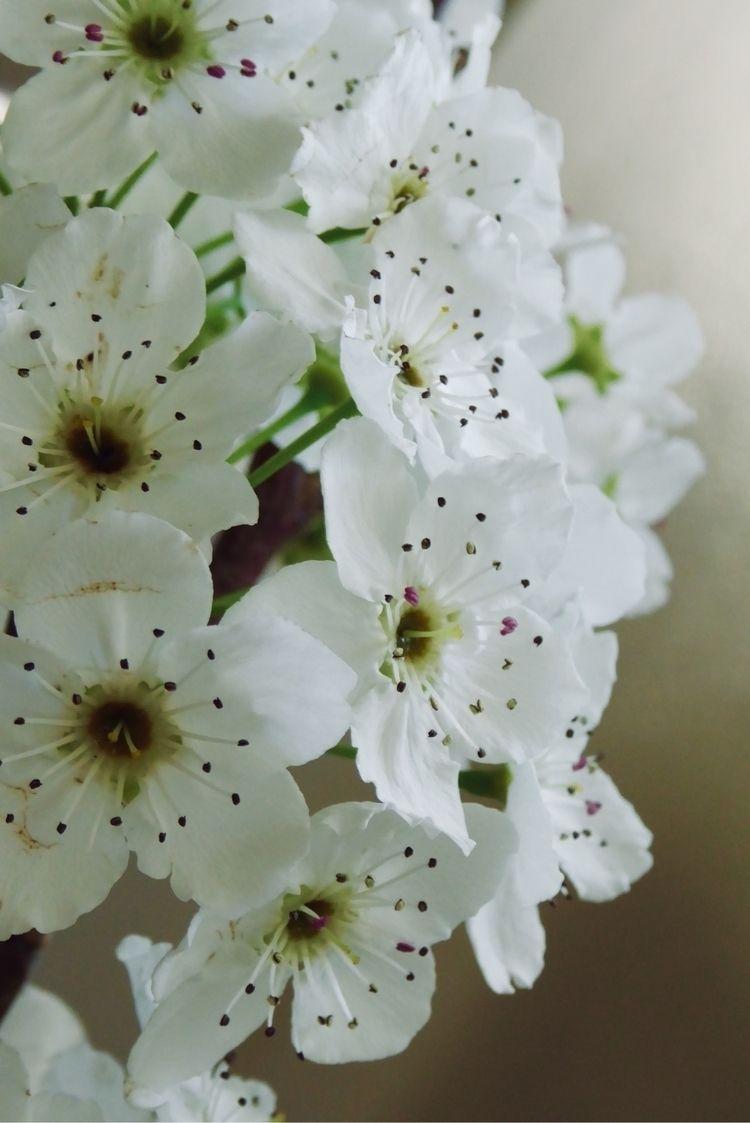 Blossoms fallen branch - spring - katemoriarty | ello