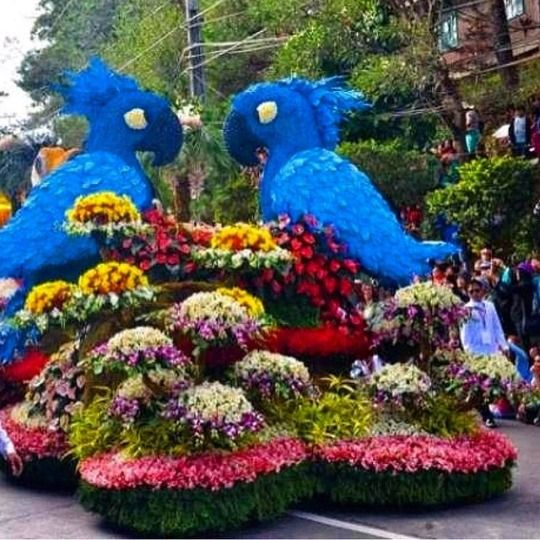 fresh flowers Baguio City - LoveBirds - vicsimon | ello