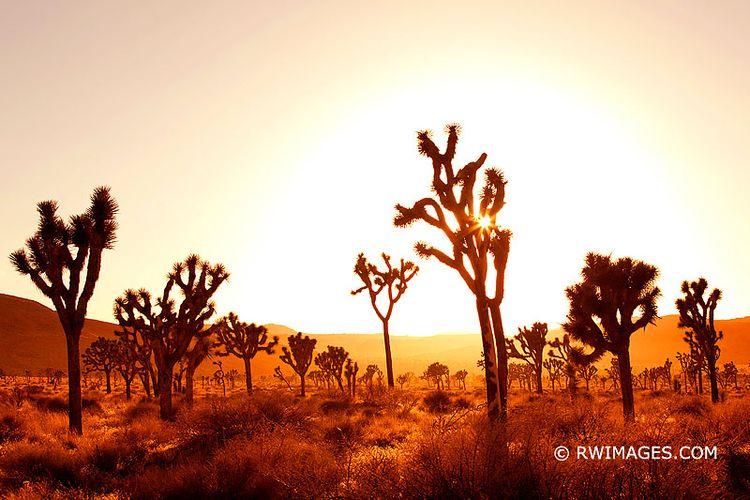 JOSHUA TREE NATIONAL PARK CALIF - robert-wojtowicz-photography | ello