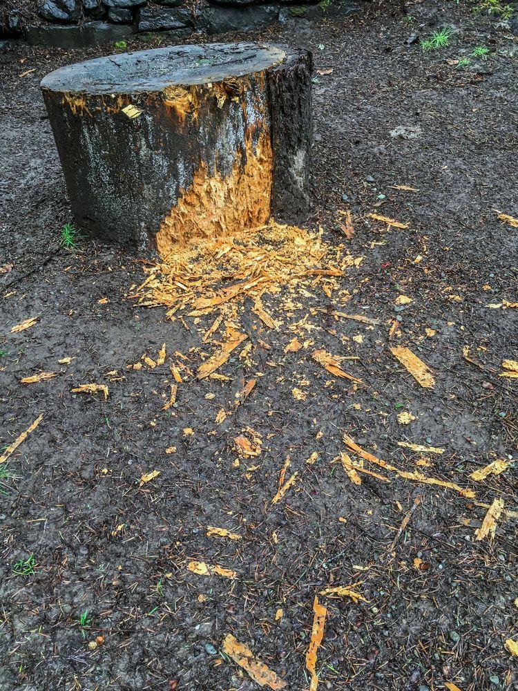 Stump Abuse mutilated chopping  - davidseibold | ello