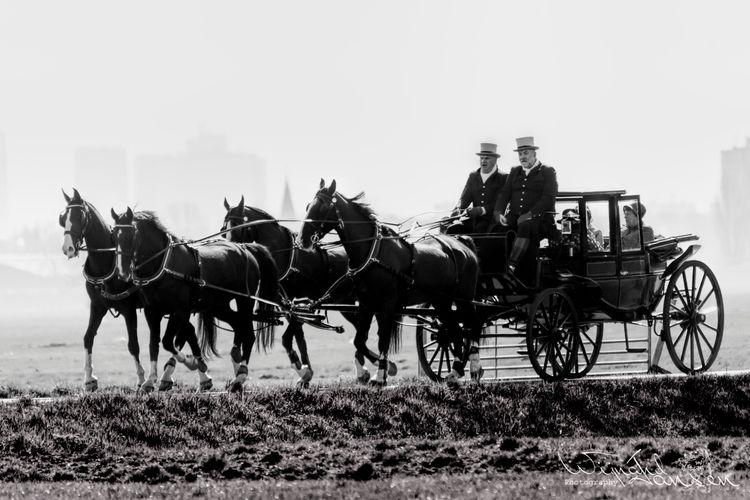 Horse-drawn carriage - artmen | ello