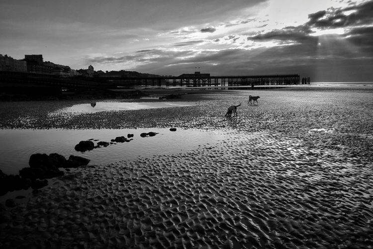 tide morning, Hastings Pier - ello - panioan | ello