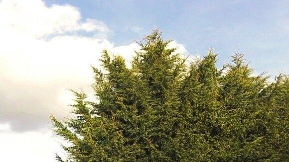 Tree - nojusgriksas | ello