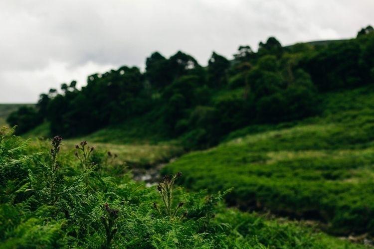 gorgeous Ireland summer  - portrait - racheldashae   ello