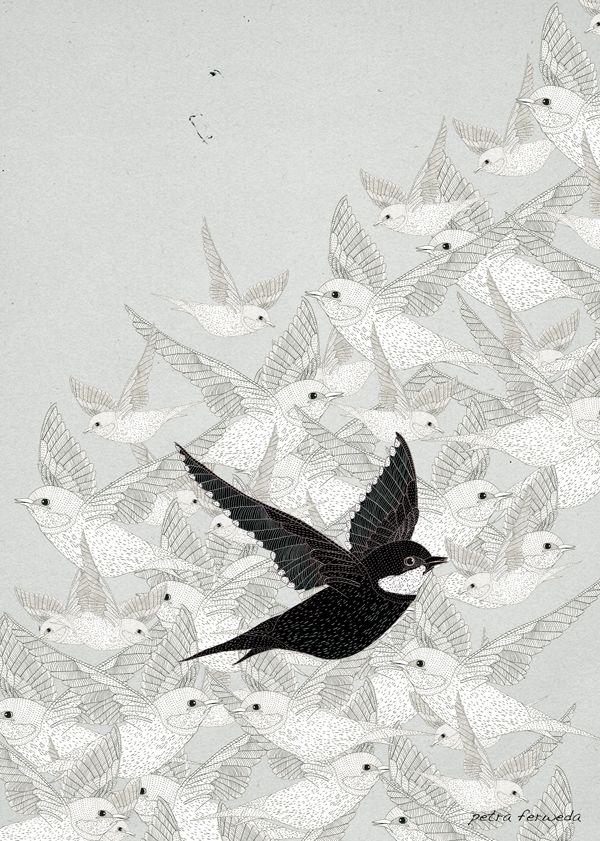 Swallow - studioferweda | ello