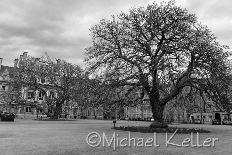 Tree Trinity College square, Du - evildad | ello