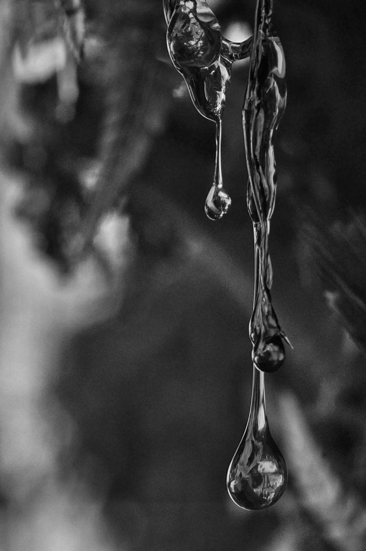 Seiva - blackandwhite, blackandwhitephotography - jsuassuna | ello