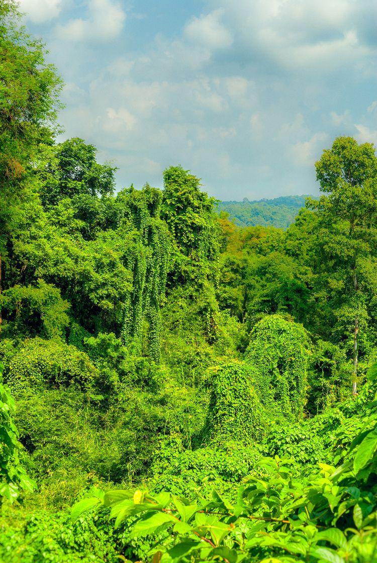 wild ocean Thailand - jungle, forest - christofkessemeier   ello