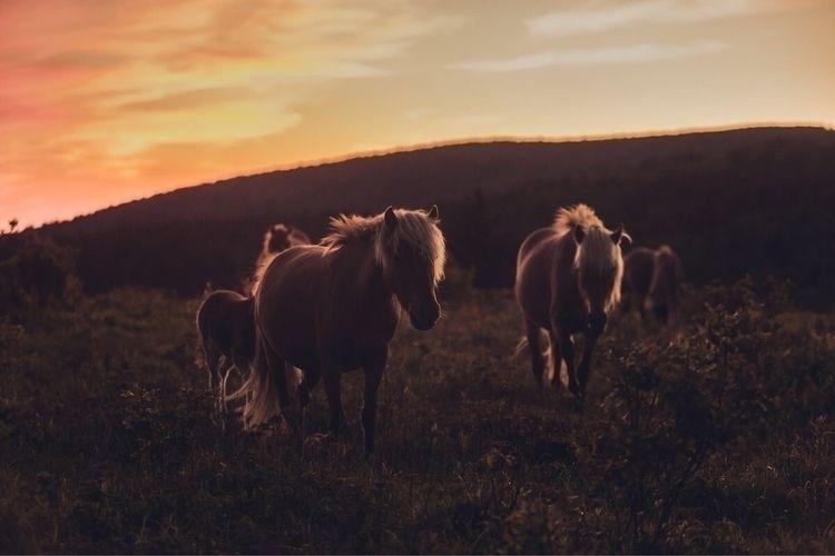light ponies Mount Rogers Wilde - samdean | ello
