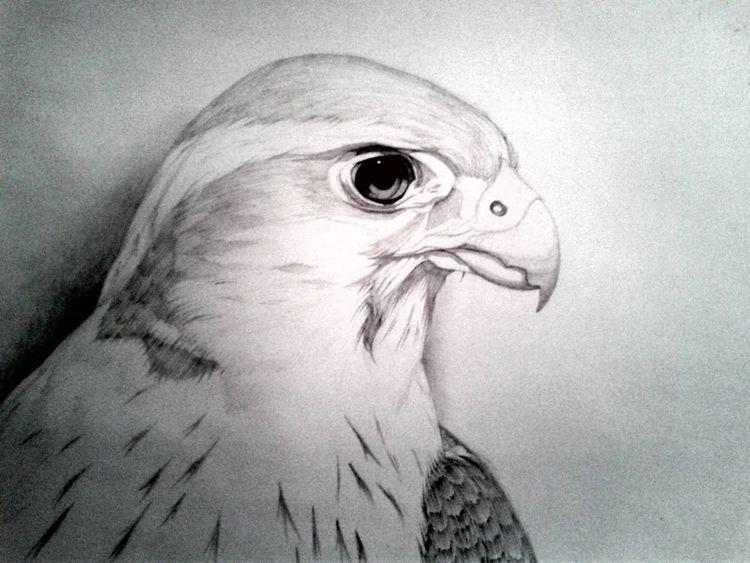 Aplomado Falcon - uzeir95 | ello