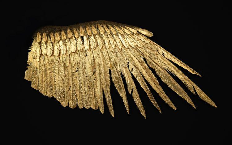 Wings birds; minds. Human poten - z3rogravity | ello